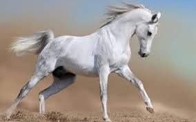 پاورپوینت بی نظیر رفتارشناسی اسب ها با تصاویر فوق العاده